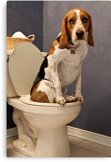 A little privacy please by Darren Boucher