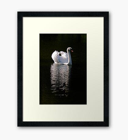 Mr Swan Framed Print