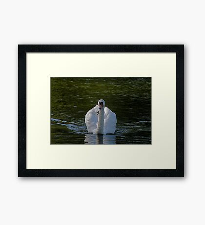 Mr Swan 2 Framed Print