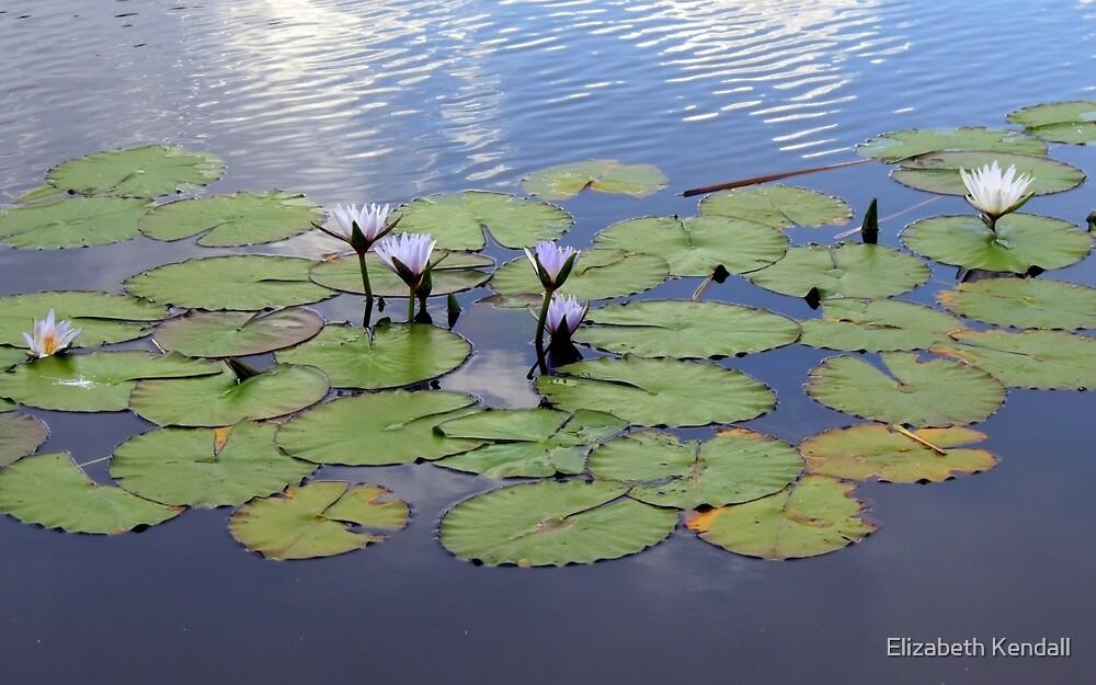 Water lilies.  by Elizabeth Kendall