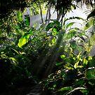 My Enchanted Garden by MaluMoraza