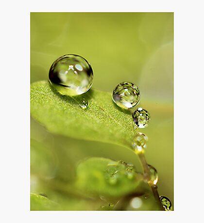 Green Globes Photographic Print