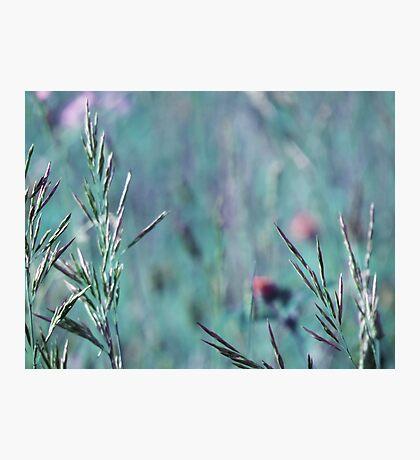 summer grass 21 Photographic Print