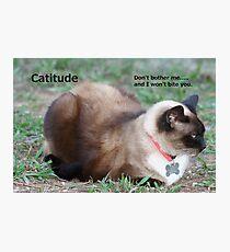 Catitude Photographic Print