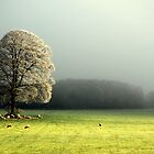 """""""LIGHT THROUGH THE MIST"""" by snapitnc"""