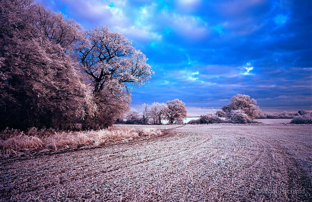 Winter field in Hertfordshire by Michael Schmid