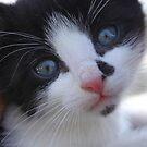 "little kitten. by Alexa ""Lexi"" Platts"