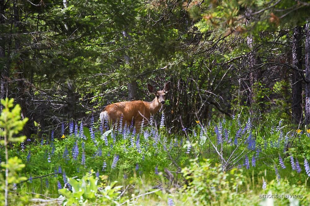 Mule deer doe by amontanaview
