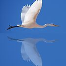 Egret in flight by junjari