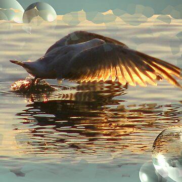 Seagull Takeoff by GretaM