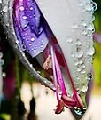 Budding Fuchsia Bloom by Tori Snow