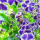 ~ Busy Bee ~ by Donna Keevers Driver