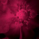 Mystical Magenta  by Ruth Palmer