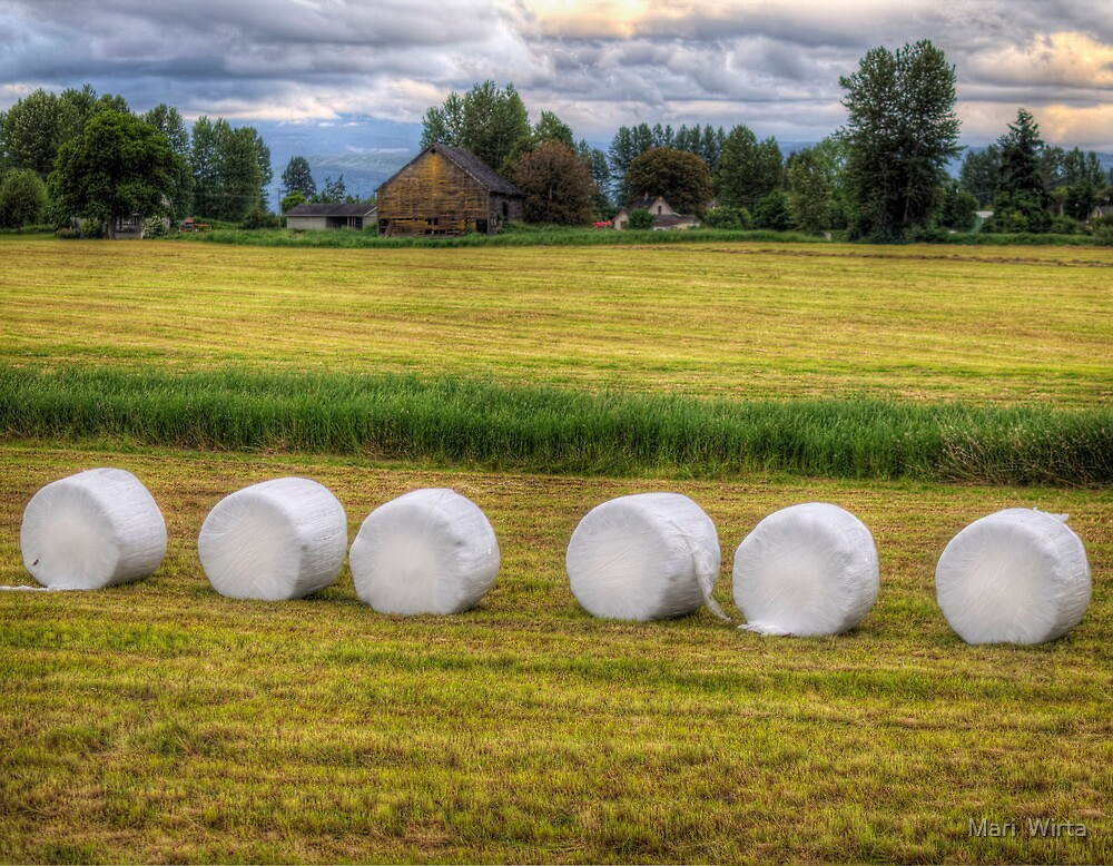 Marshmallows in the Field by Mari  Wirta