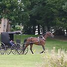 Amish Buggy by Karl R. Martin