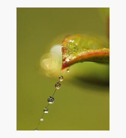 Leafy Tears Photographic Print