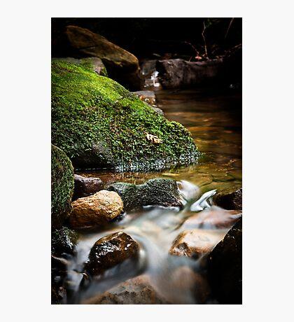Contemplating Nature I Photographic Print