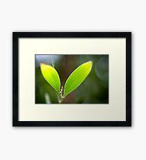 Eco Framed Print