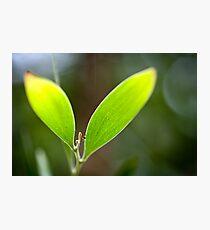 Eco Photographic Print