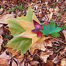 Autumn Colours by Stecar