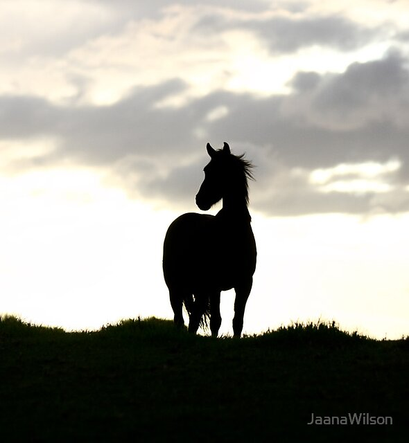 Outline of Windswept beauty by JaanaWilson