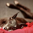 Legs 11 - view of the couch! by GreyhoundSN