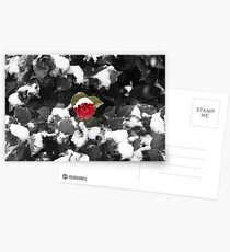 Camelia in the Snow Postcards