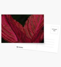 Red&Black abstract plant, Leamington Spa. Postcards