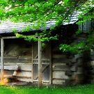 Summer Cottage © by Dawn Becker