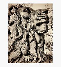 Salts lion Photographic Print