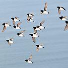 Flying Little Auk on Pillarberget by Algot Kristoffer Peterson