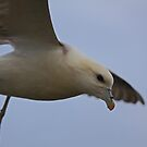 Fulmar checks me out !! by Fred Taylor