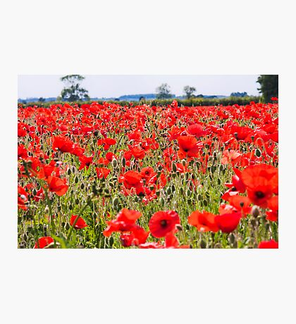 Field on Fire  Photographic Print