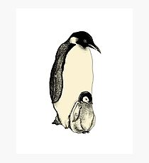 Penguin and a little Photographic Print