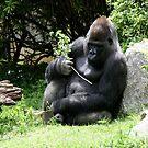 Gorilla by Michelle Callahan