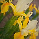Iris by TyTheTerrible