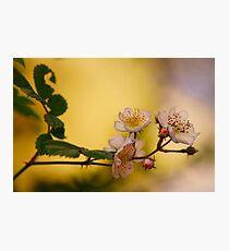 Wild Strawberry Photographic Print