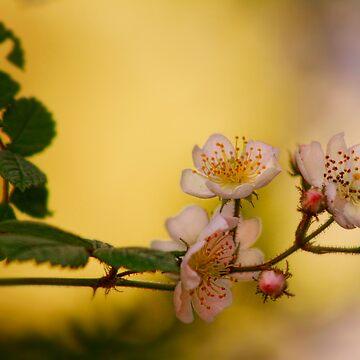 Wild Strawberry by Foxfires
