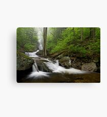 Below Ozone Falls Canvas Print