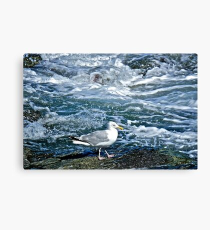A Seagull Steps Along The Surf - Newport Rhode Island Canvas Print