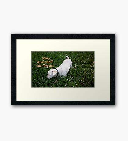 Stop and smell the flowers Framed Print
