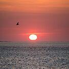 Ocean Sunrise - Acadia National Park, Maine by Jason Heritage