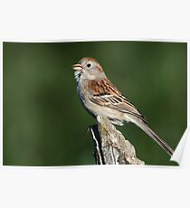 Out Of Right  Field / Field Sparrow Poster
