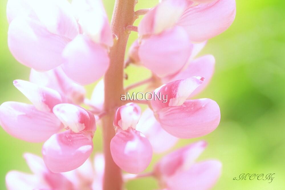 Lupinus by aMOONy