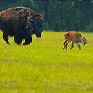 Two Day Old Buffalo Calf by Joe Jennelle