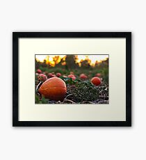 Orange Pumpkin Patch Framed Print
