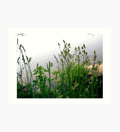 Grass on the banks of the Rideau River, Ottawa Art Print