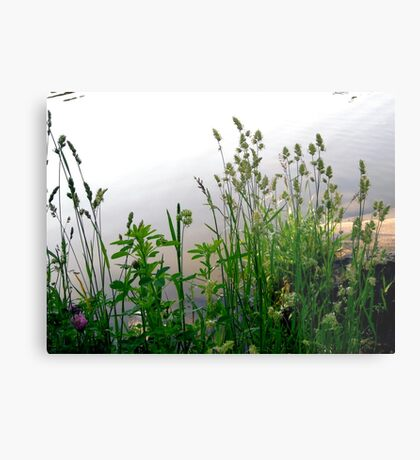 Grass on the banks of the Rideau River, Ottawa Metal Print