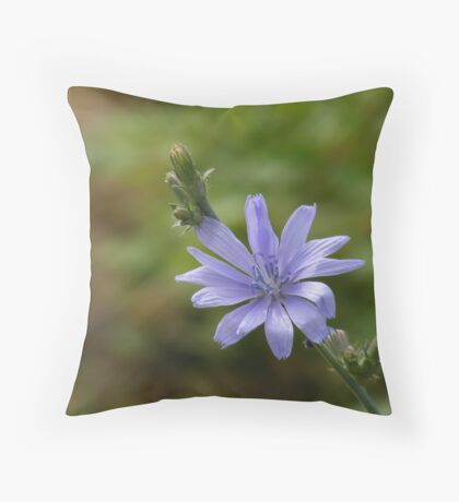 Blue Sailor (Cichorium intybus) Throw Pillow