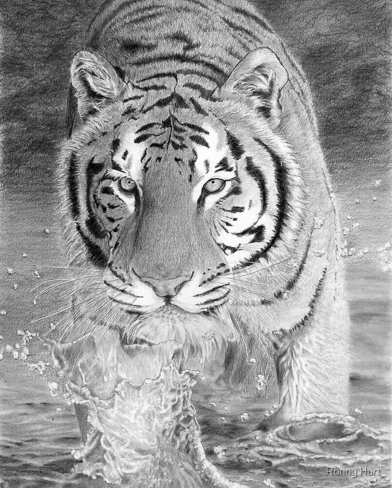 Tiger Crossing River by Ronny Hart